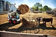Bobcat S590 skid-steer loader lifts a bale of hay into a feeder on a dairy operation.