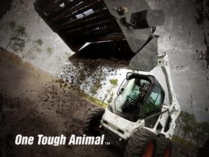 One Tough Animal Wallpaper