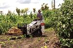 A MT85 Bobcat® mini track loader carries materials through a garden.