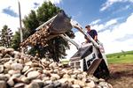 Bobcat MT85 mini track loader dumping landscaping rocks with a bucket.