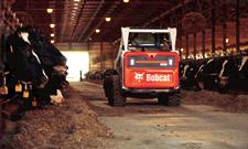 Bobcat S590 skid-steer loader in a dairy barn.