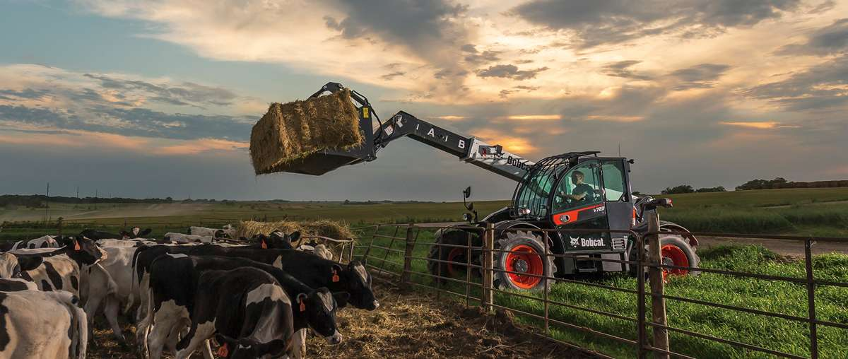 Bobcat V723 Lifitng Hay Over Fence To Cows