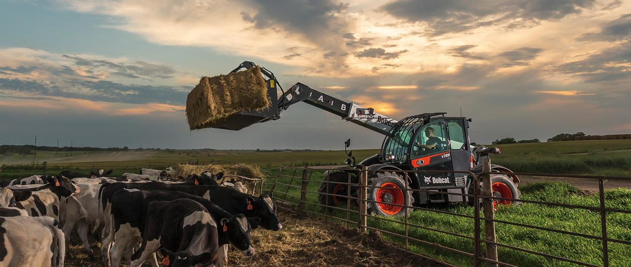 Bobcat V723 VersaHANDLER telescopic tool carrier (telehandler) lifting hay bales on a dairy farm.